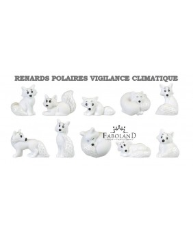 Polar foxes - climatic vigilance