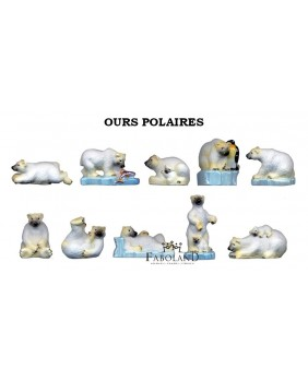 Ours polaires